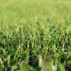 Centipede Grass Pros and Cons