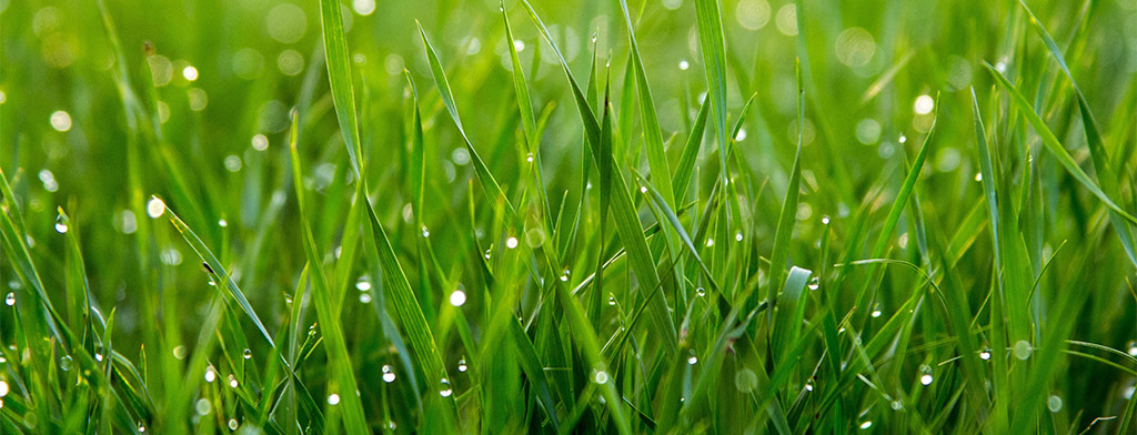 Healthy, Weed-free Lawn