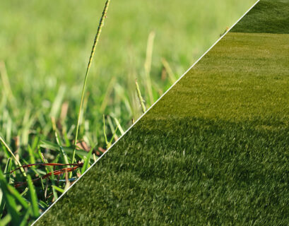Centipede and Bermuda Grass