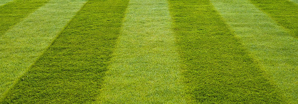 Manicured Bermuda Grass