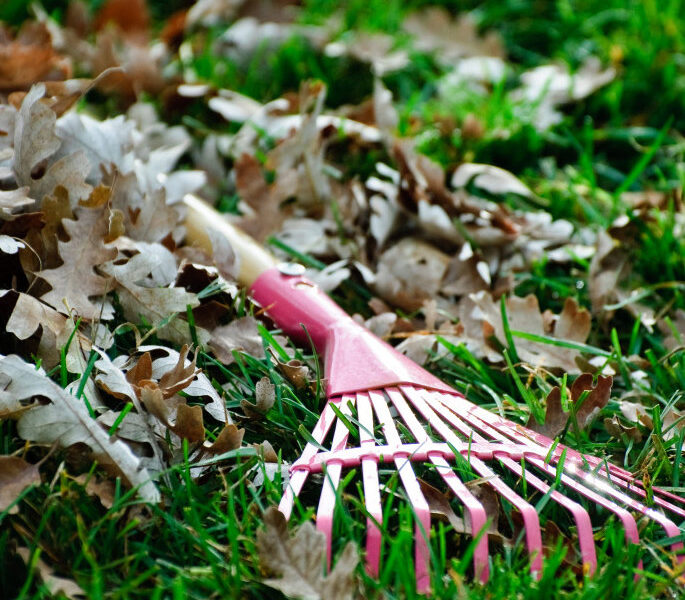 Rake and Leaves with Green Grass